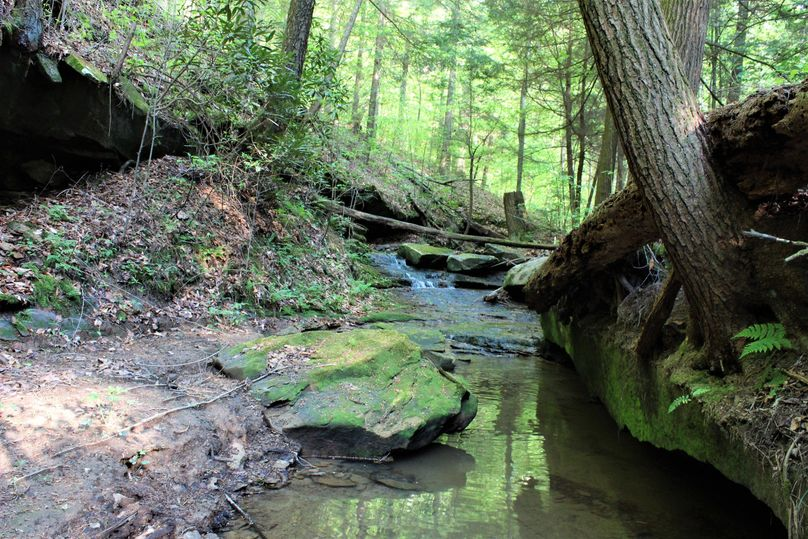 025 the main forest stream running along the south boundary