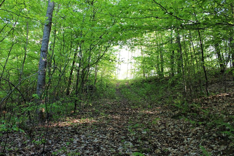 028 forest road leading about the property