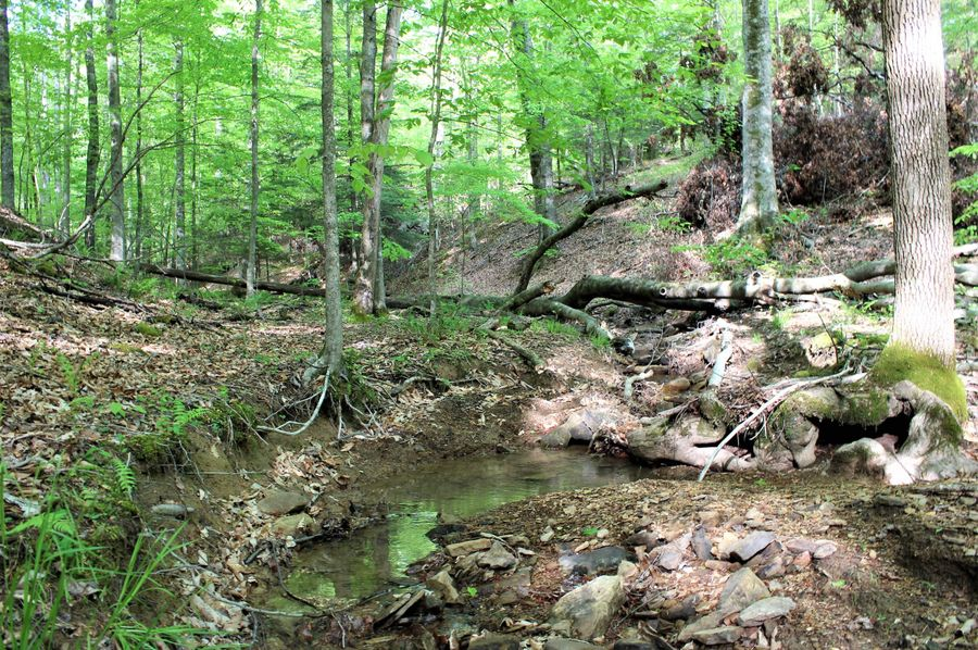 033 the south main creek area in the upper reaches