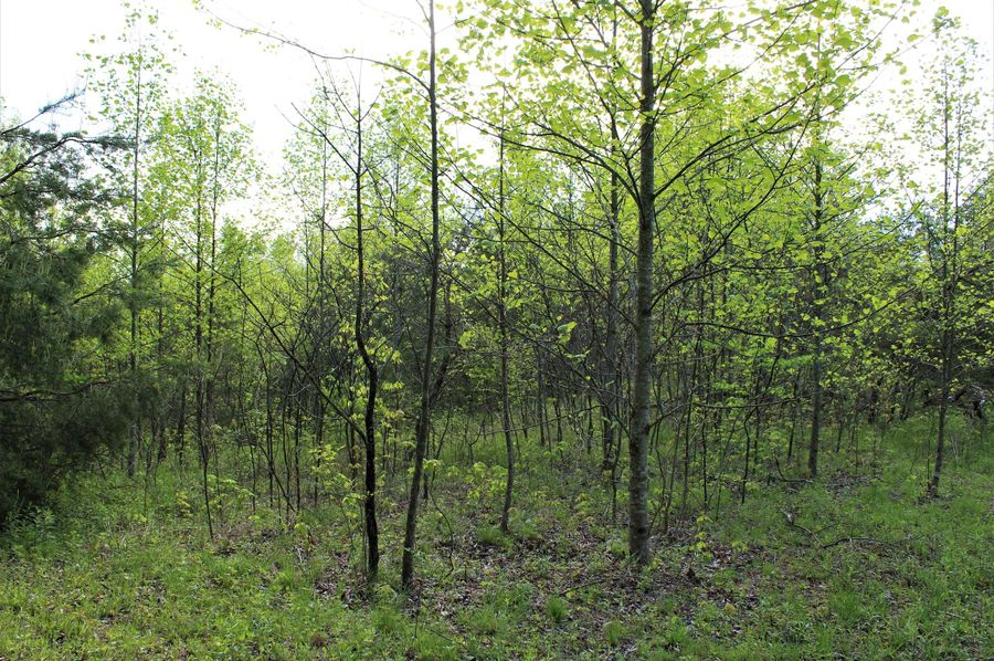 030 one of a couple acres of old field growth for wildlife