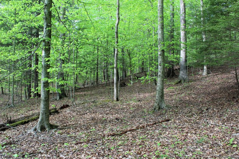 031 open forest area near the southwest area of the property