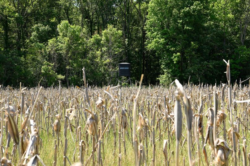 (6)shooting house in corn