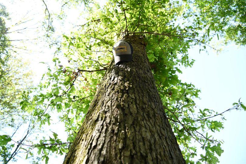 (12)white oak