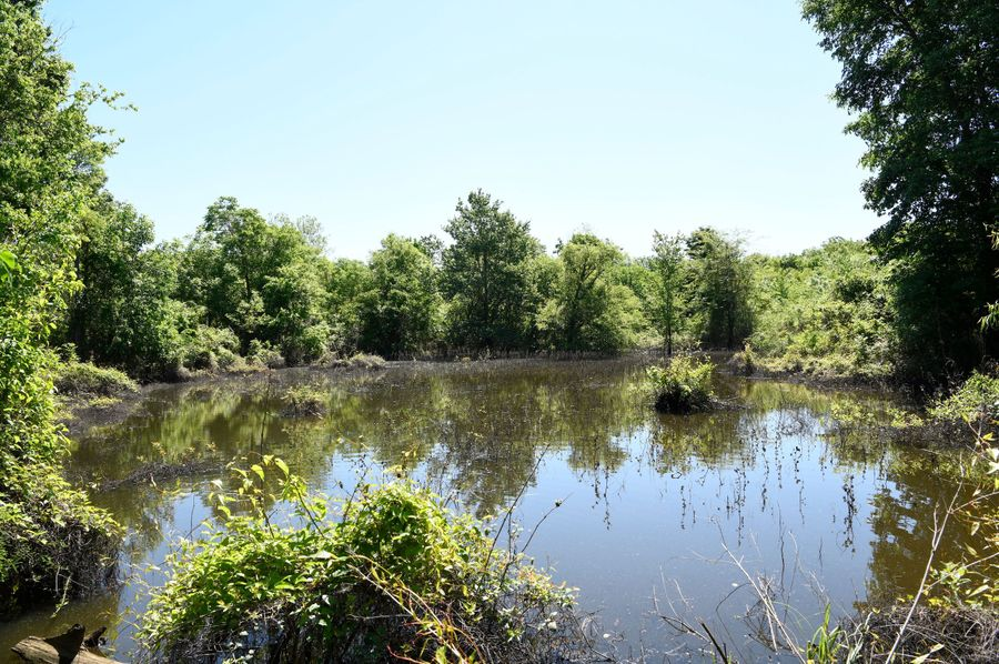 (2)duck pond
