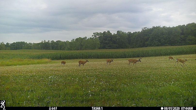 1 deer2020