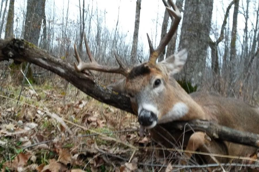 Deer 236 pounds!