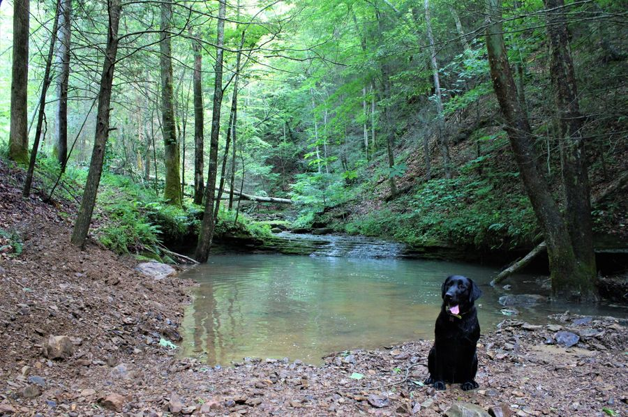 001 aspen impatiently holding for a quick photo at the  swimming hole  along the east northeast boundary