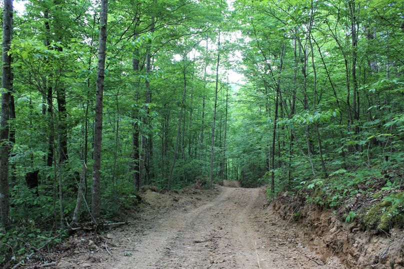 004 one of the many network of roads leading throughout the property providing excellent access
