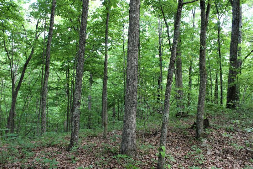 009 good stand of hardwood timber along the ridges and slopes