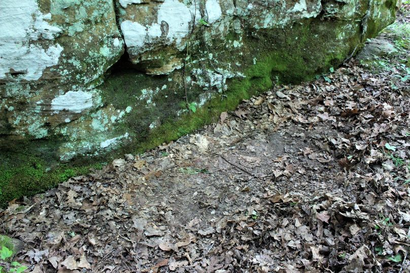 015 well look at that, a deer bed sitting right up against the rock, making the most of the nice cool shade of the boulder