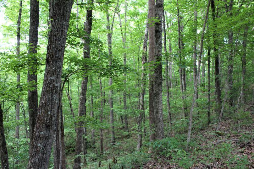 020 oak hickory hardwood ridge and upper west facing slope