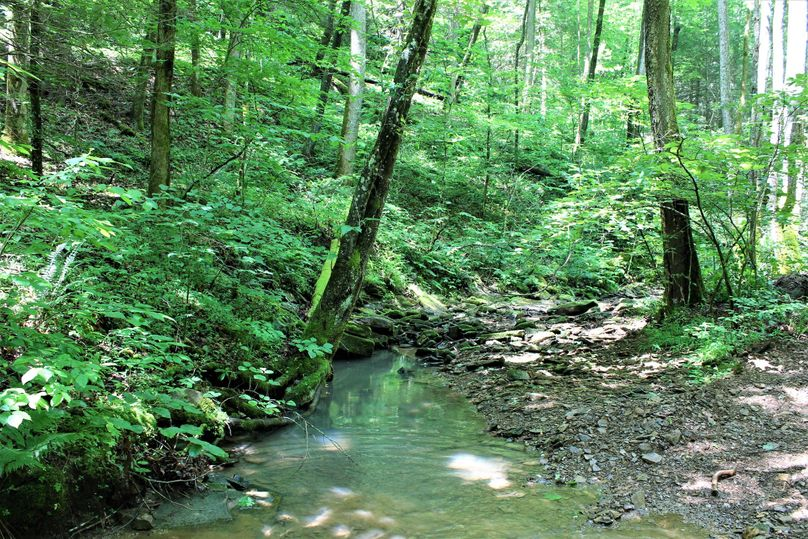 031 main stream in the north central part of the property