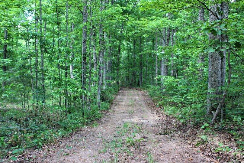 032 forest road leading in from the blacktop county road near the entrance