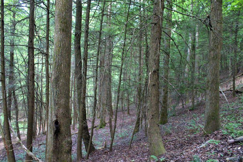 034 huge hemlock strip in the northeast area of the property