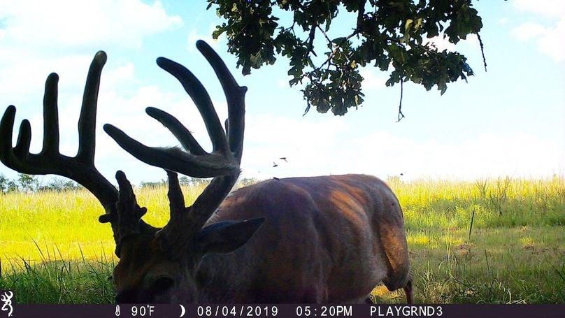 2019 buck (10 point hot summer buck)