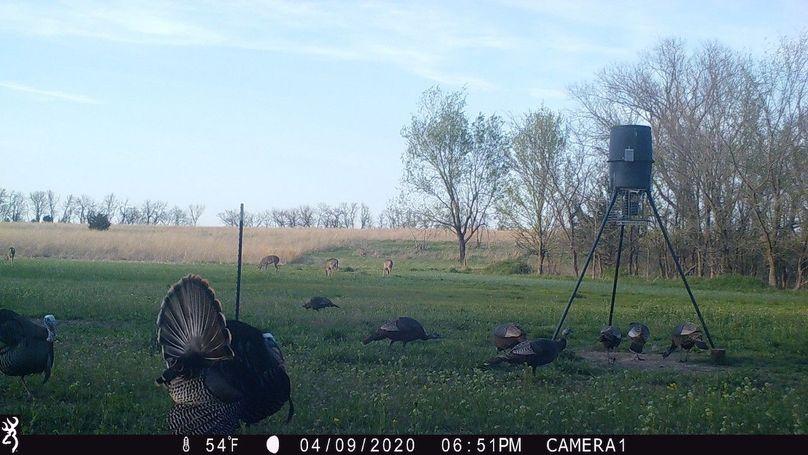 2020 spring turkeys and deer