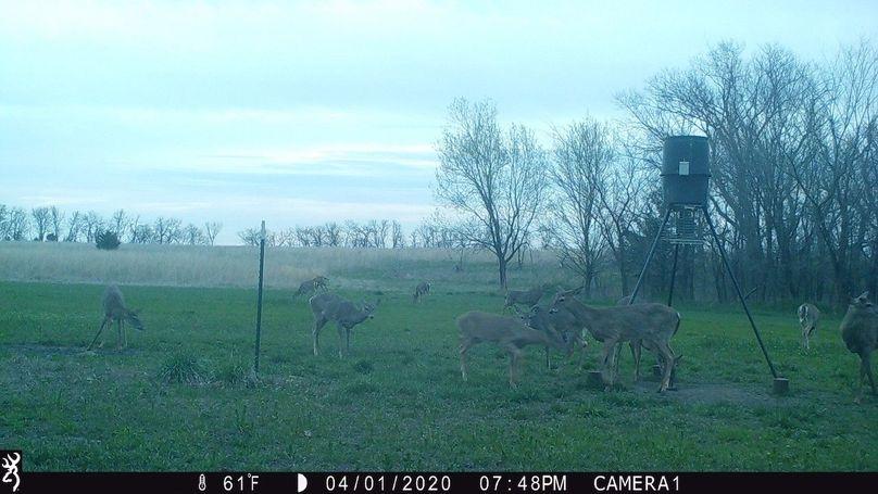2020 spring deer