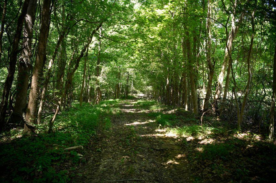 12 woods road