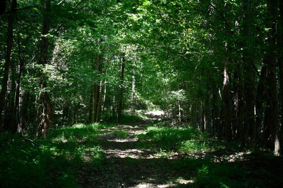 7 woods