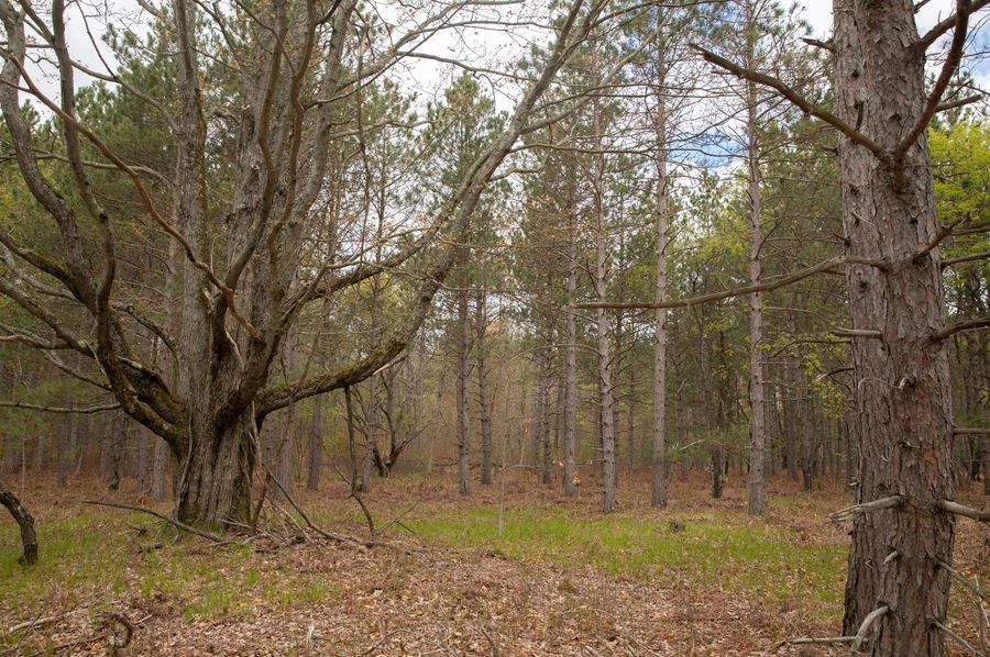 19 manistee national forest