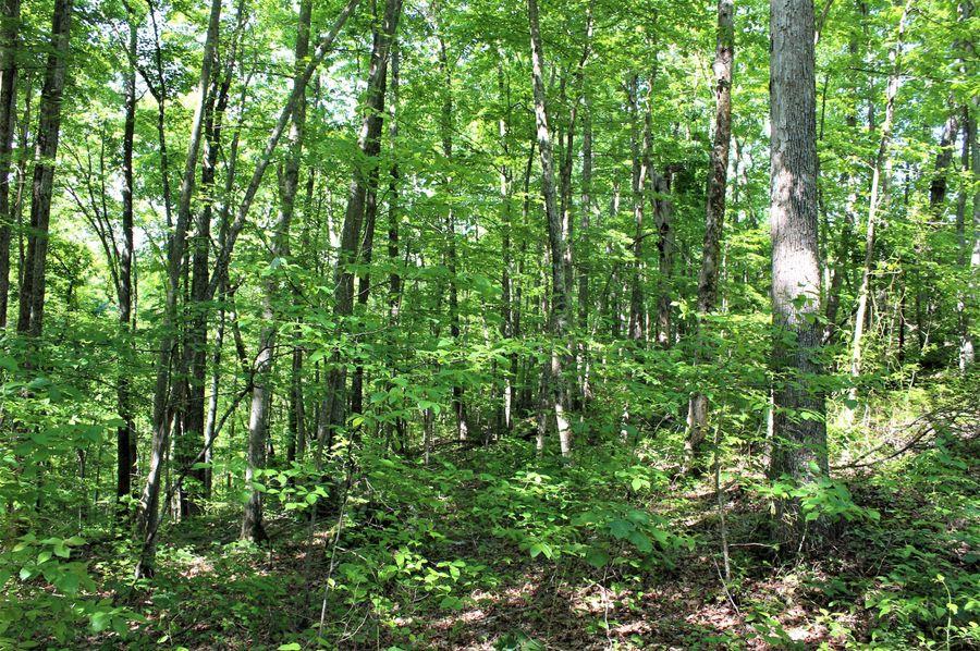 004 wooded south facing ridge slope