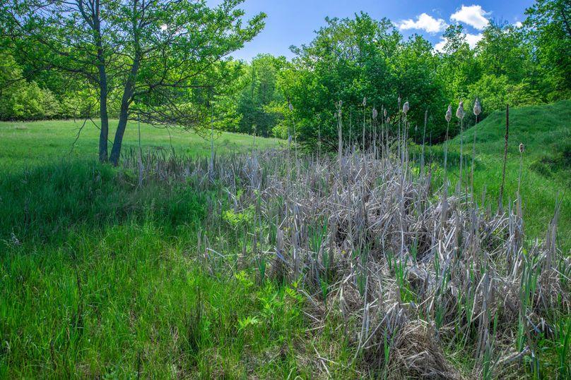 12 natural spring