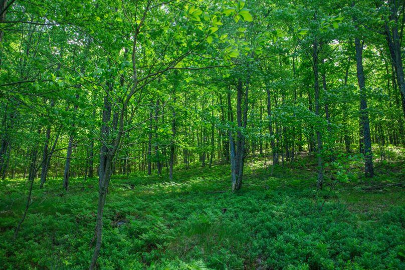 2 timbered ridges