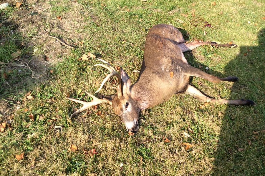 Buck taken schaefer farm