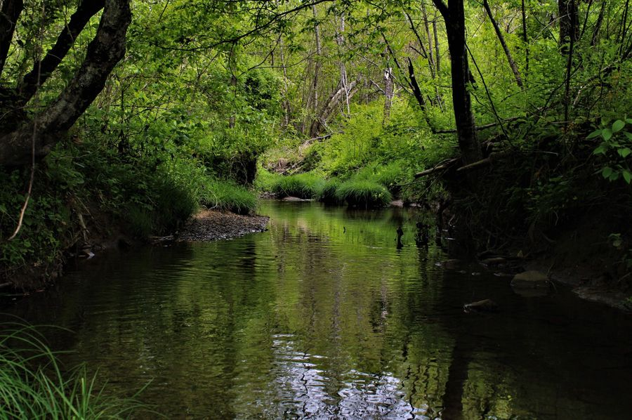 004 nice still waters of the stream feeding roaring paunch creek