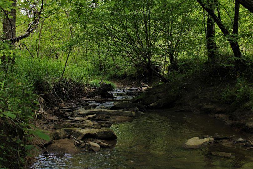 013 nice stream feeding the creek system