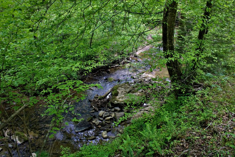 010 roaring paunch creek at its finest