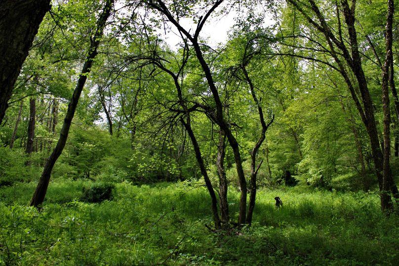 011 nice flat land along the stream edge
