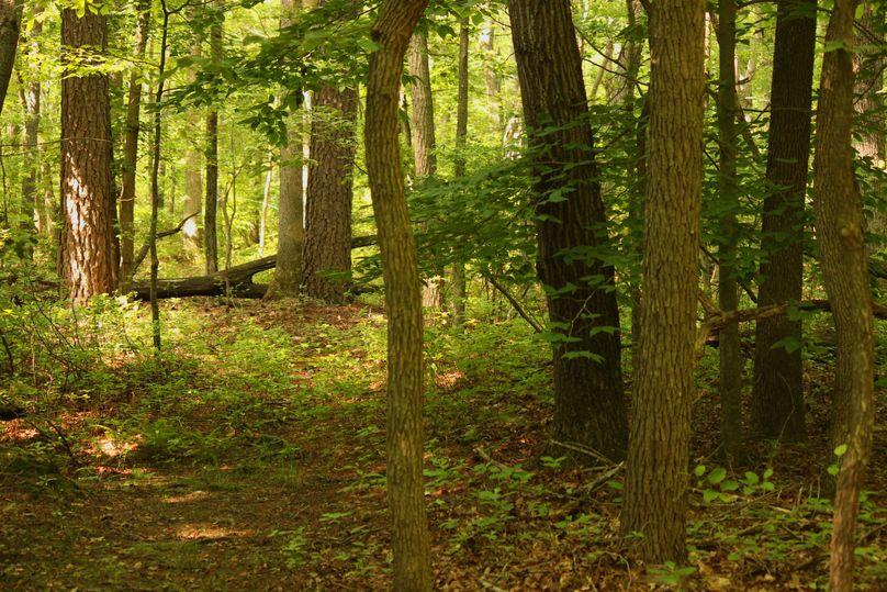 38.70ac queenanne  trail