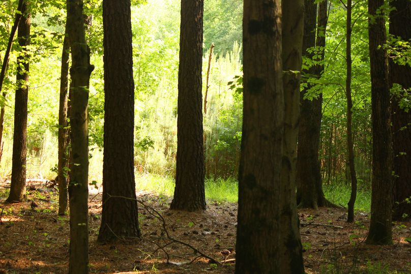 38.70ac queenanne  trees