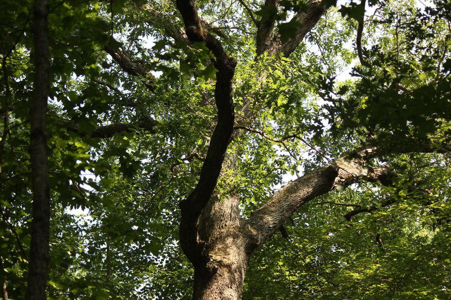 38.70ac queenanne  oak