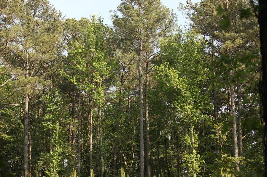 38.70ac queenanne  pines