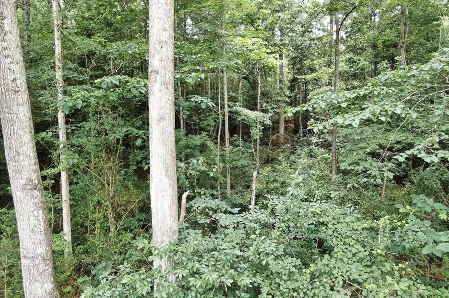24 timber near creek