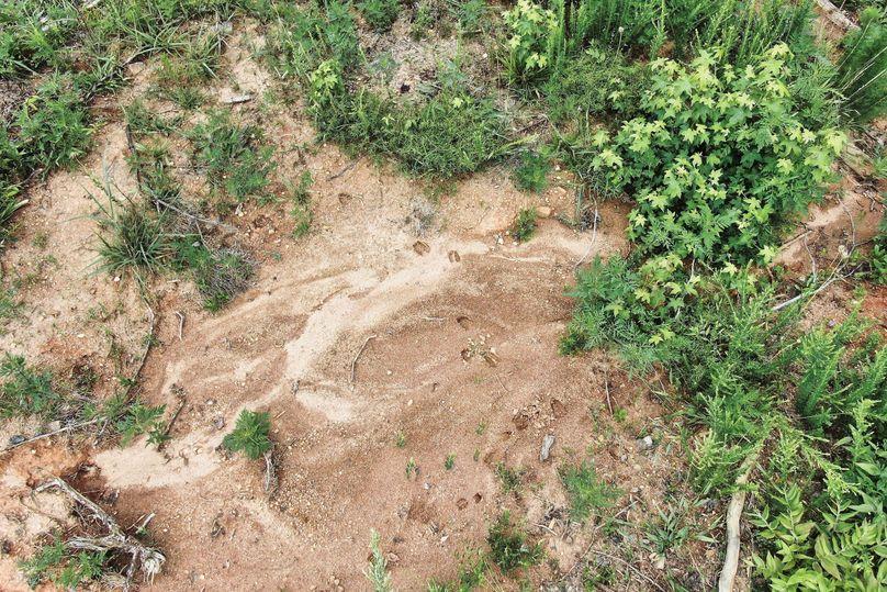27 deer tracks 1