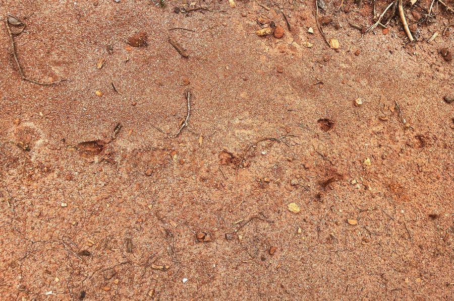 28 deer tracks 2