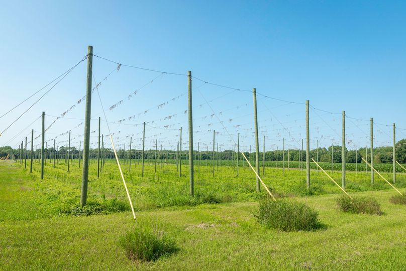 3 5 acres trellised for hops