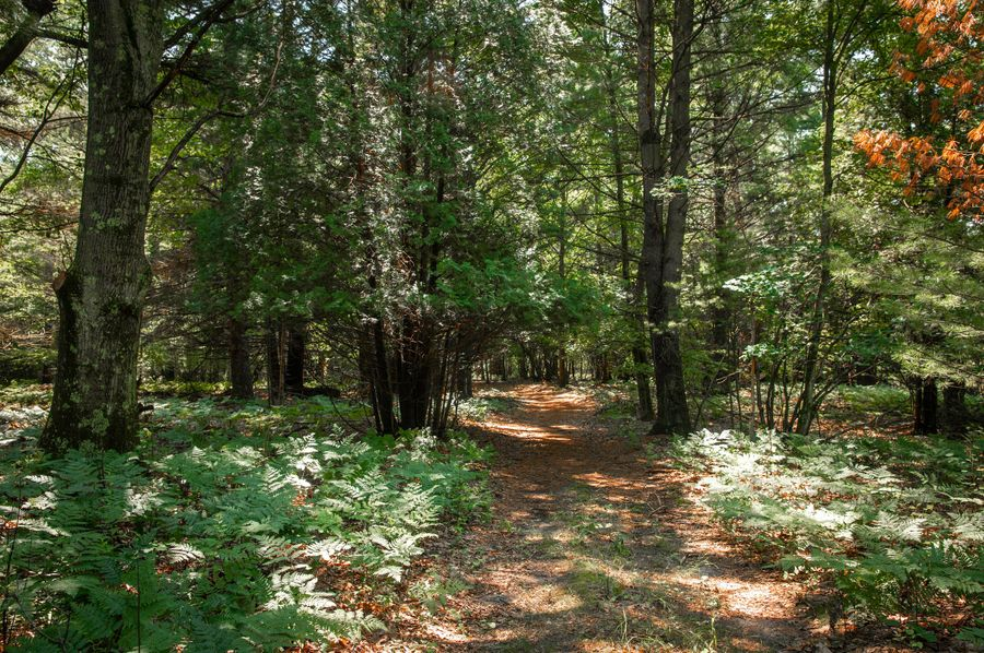 45 access through manistee national forest to the pere marquette river