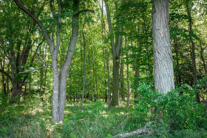 42 hardwood timber