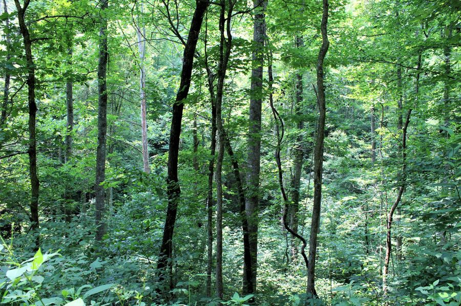 005 big mature timber along creek in the southeast corner