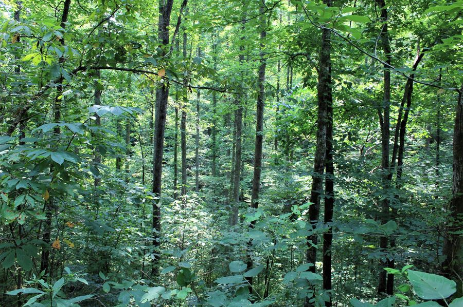 016 forested area in the eastern section of the property