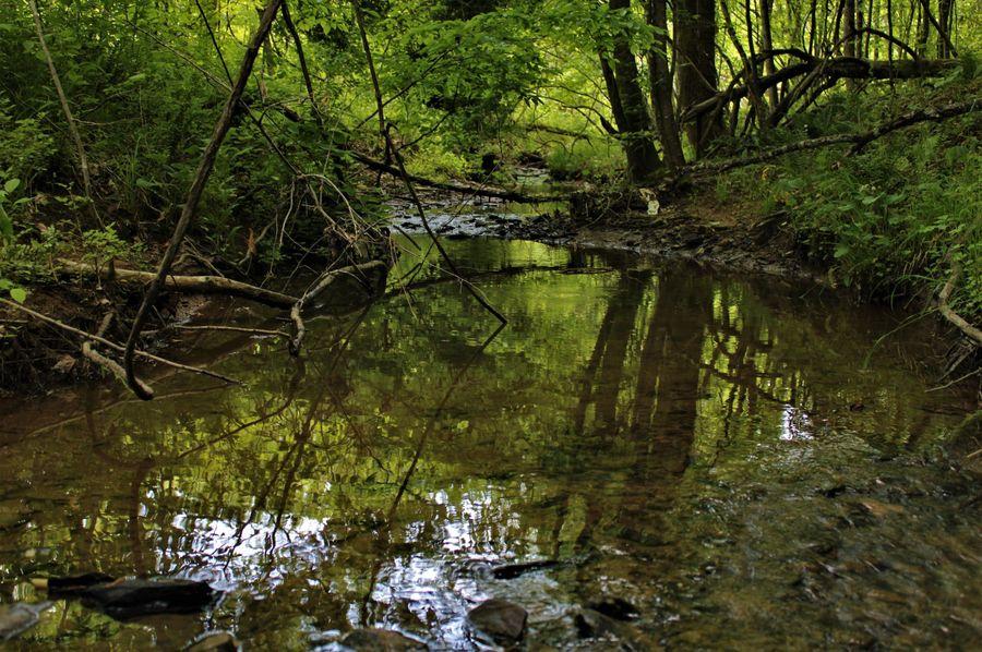 006 pristine waters of rich creek