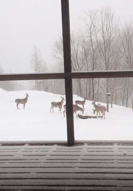 016b deer paying a visit on a snowy winter day