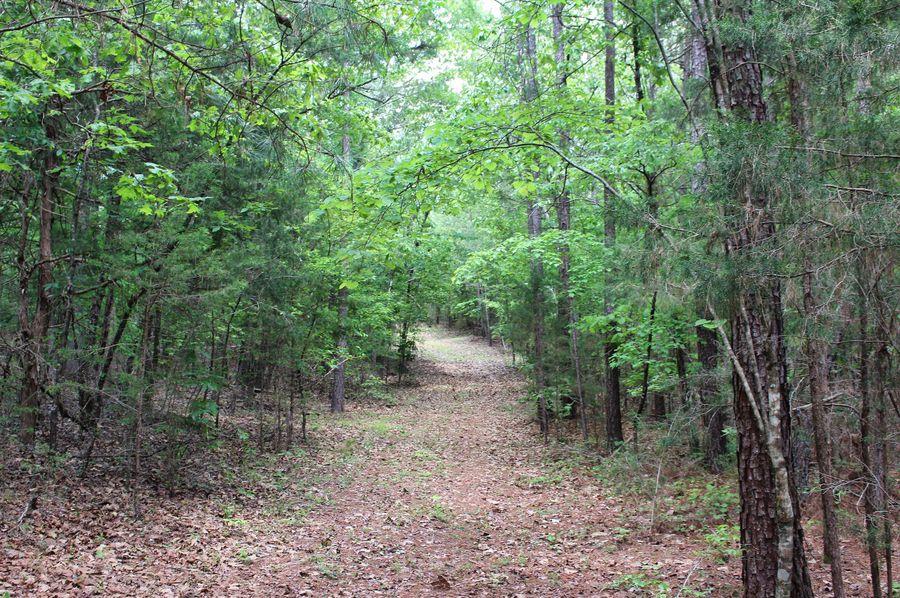 04 trail pic 1