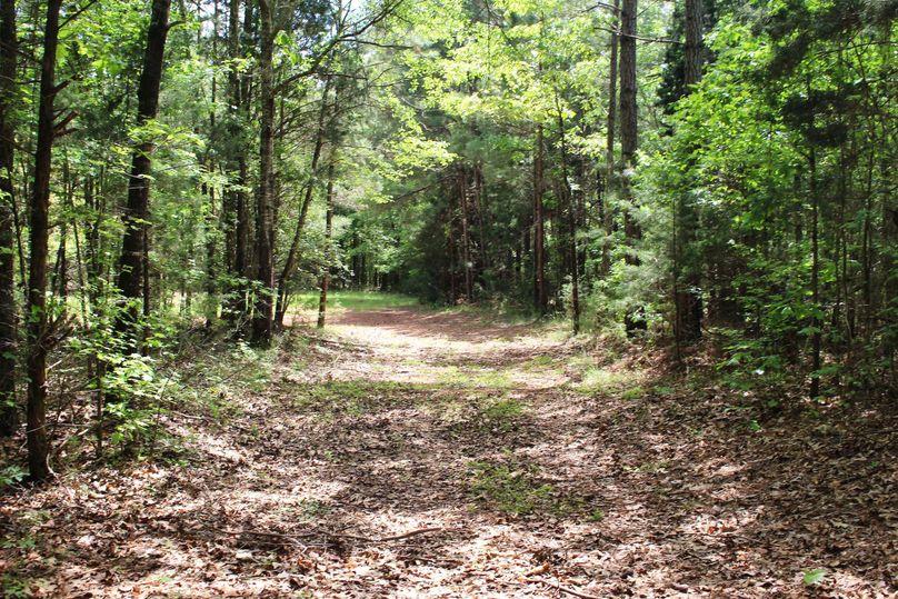 05 trail pic 2