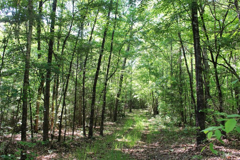 15 trail pic 4