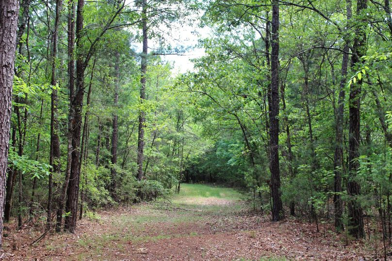 10 trail 3